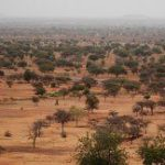 Call to save Africa's forests
