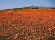 South Africa's plant life