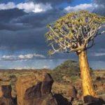 Namibia cross-border park