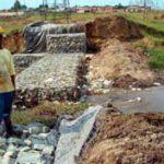 Soweto wetlands return to life