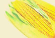 Ethanol Africa: clean maize fuel