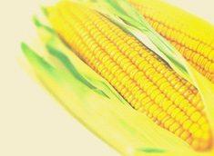 Ethanol Africa: clean maize fuel