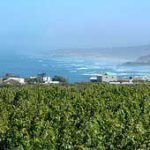 Pushing South Africa's 'bio-wines'
