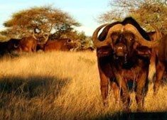 South Africa's new national park