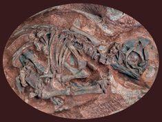 Dino embryos the world's oldest