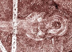 New 'living fossil' joins coelacanth