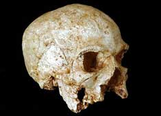 Skull supports Africa origins theory