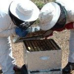 Village ventures into beekeeping