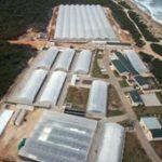 R9bn prawn hatchery for Coega