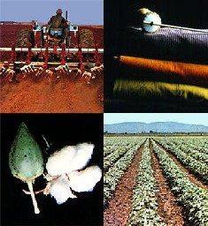 R150m for E Cape cotton project