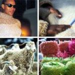 South Africa's mohair mojo