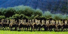 Ostrich farmers hold heads high