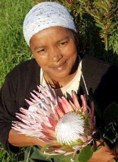 Exporting Mandela's proteas