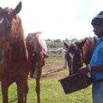 Showjumping in Soweto