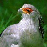 South Africa's bird life