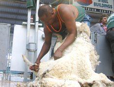 SA shearers retain world title
