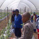 Fresh produce co-op to supply Massmart