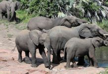 South Africa's elephant Norms and Standards to be amended