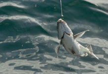 South Africa resumes seafood exports to Russia