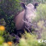 A calf for Thandi