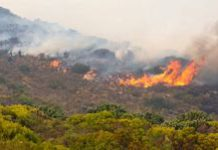 Cape fires are 'right on time' for fynbos