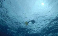 SA freediver wins Nordic Deep 2008