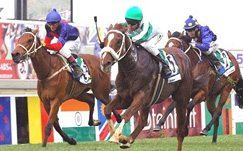 Horse racing in South Africa