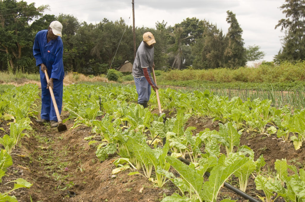 Hoedspruit, Limpopo province: Bavaria farm food garden