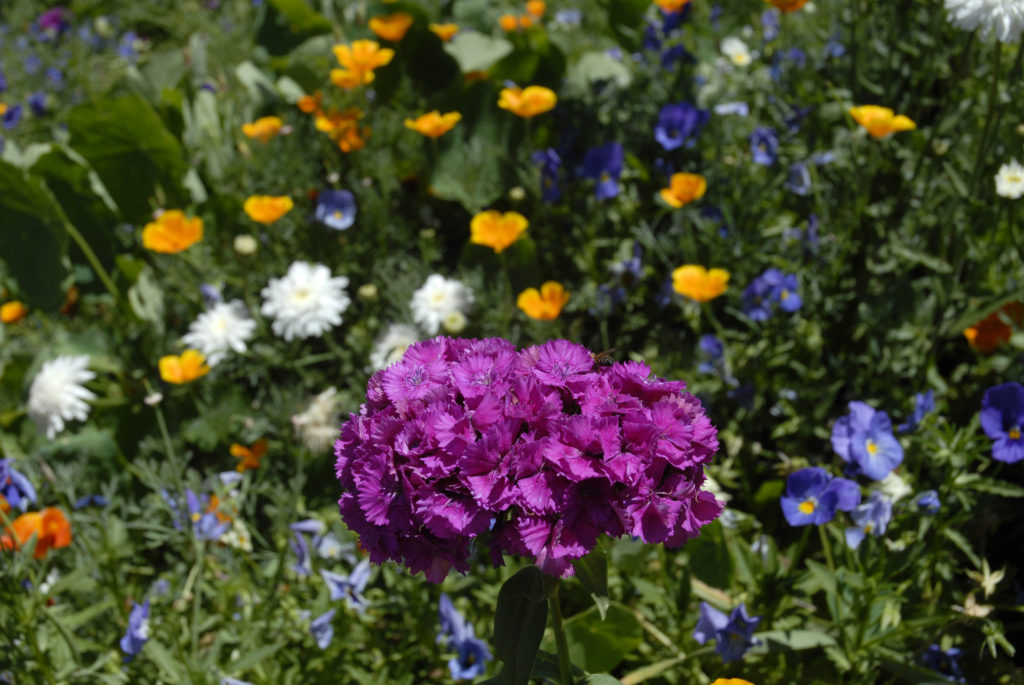 Harrismith, Free State province: wild flowers