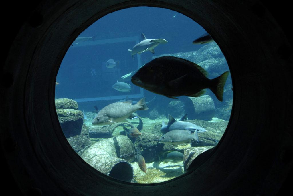 The aquarium at uShaka Marine World theme park