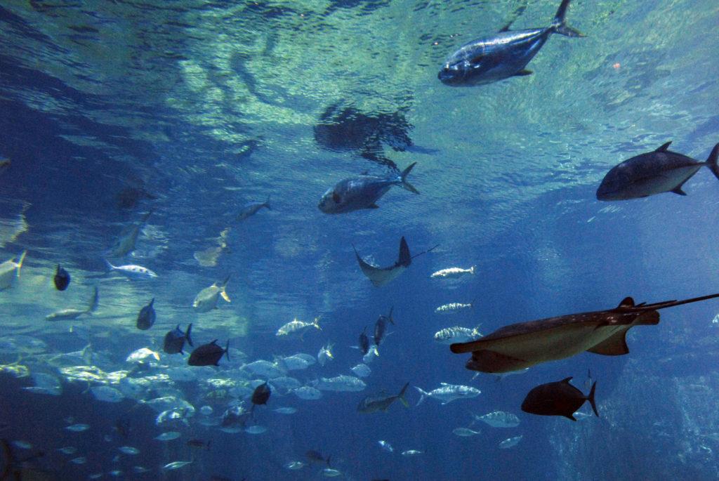 Durban, KwaZulu-Natal: Aquarium at uShaka Marine World