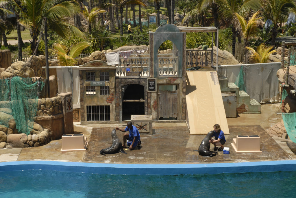 The seal show at Sea World in the uShaka Marine World theme park