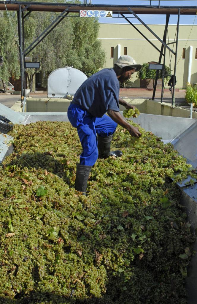 Northern Cape province: Orange River Wine Cellars