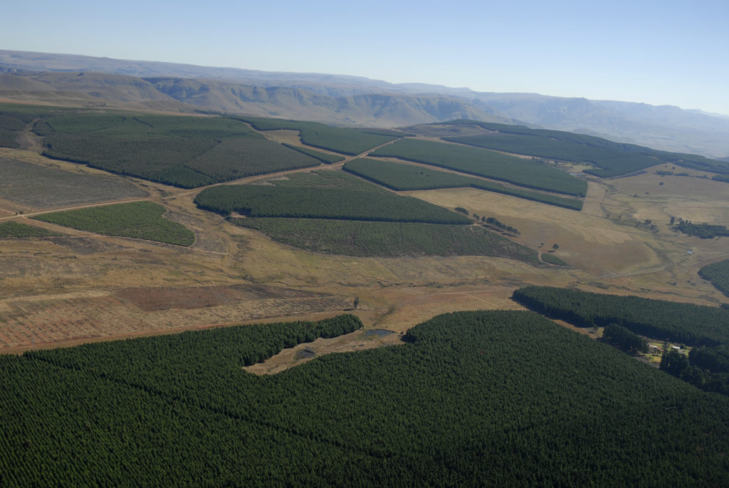 South Africa Mpumalanga: Sappi forests in the Lydenburg area