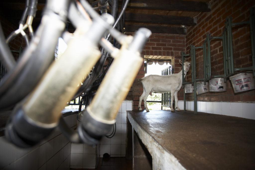 Swissland Cheese farm, KwaZulu-Natal Midlands