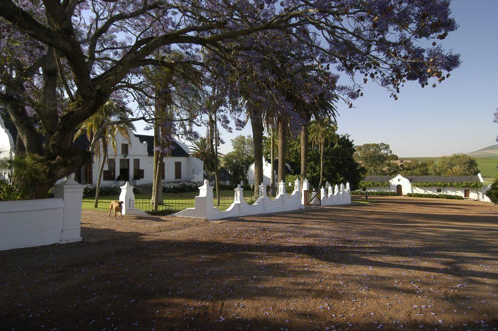 Western Cape province: Diemersdal Werf Wine Estate