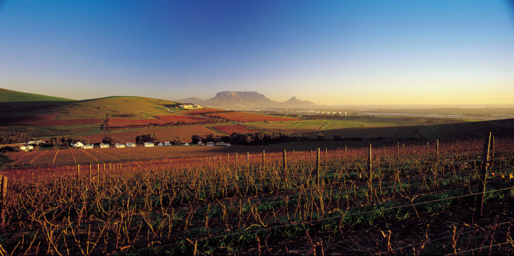 Western Cape province: The Durbanville Valley