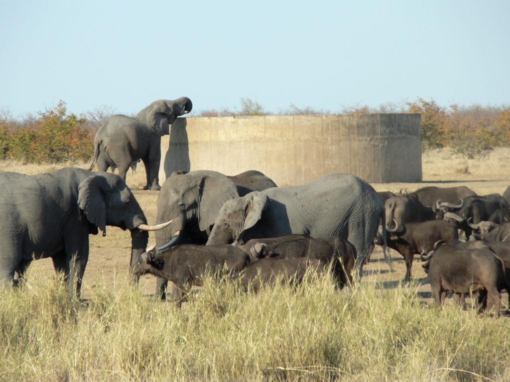 Limpopo province: Elephants, Kruger National Park