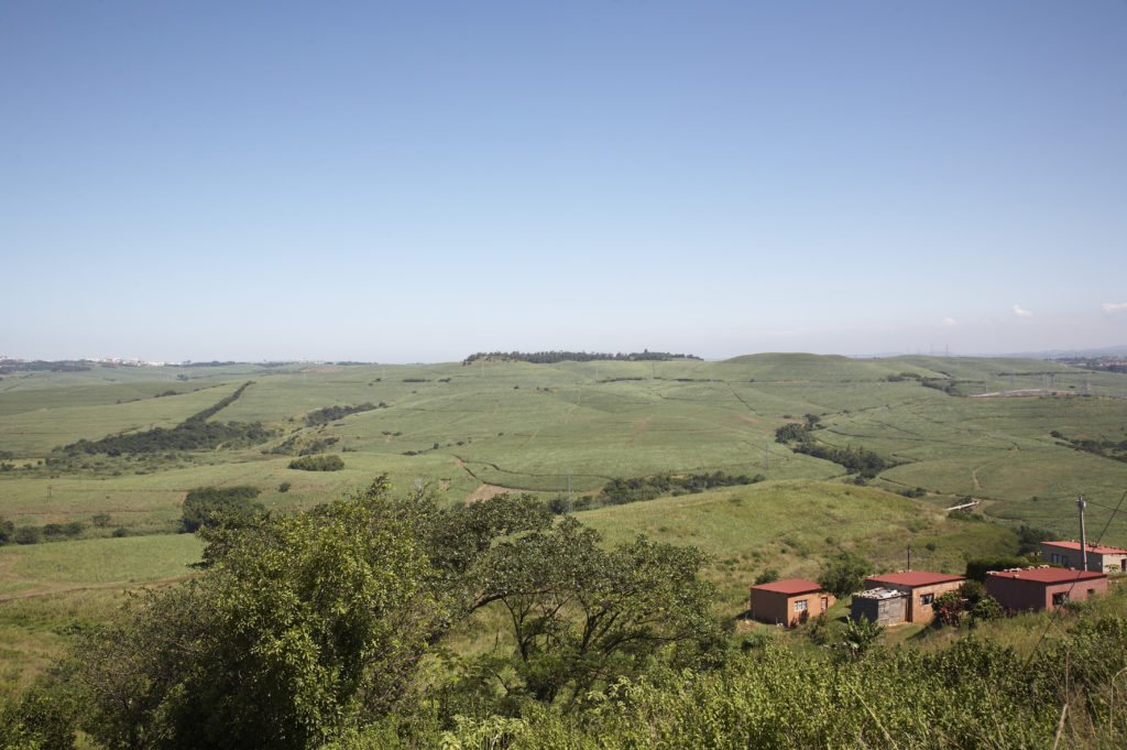KwaZulu-Natal North Coast: Sugarcane fields
