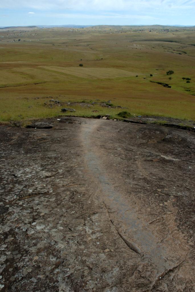 Qunu, Eastern Cape province: Cattle graze in fields outside the village