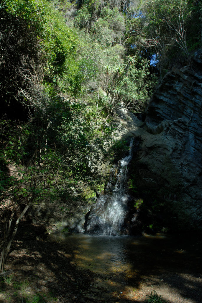 Eastern Cape: Waterfall and indigenous forest in the Tsitsikamma National Park