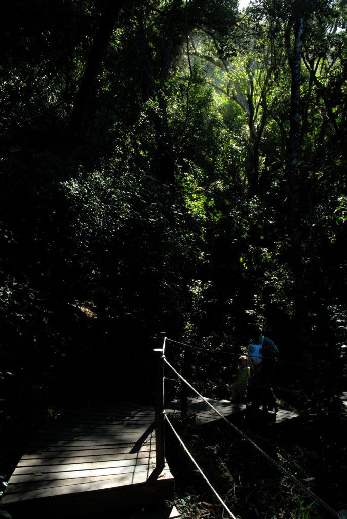 Eastern Cape province: Walkway in the Tsitsikamma National Park