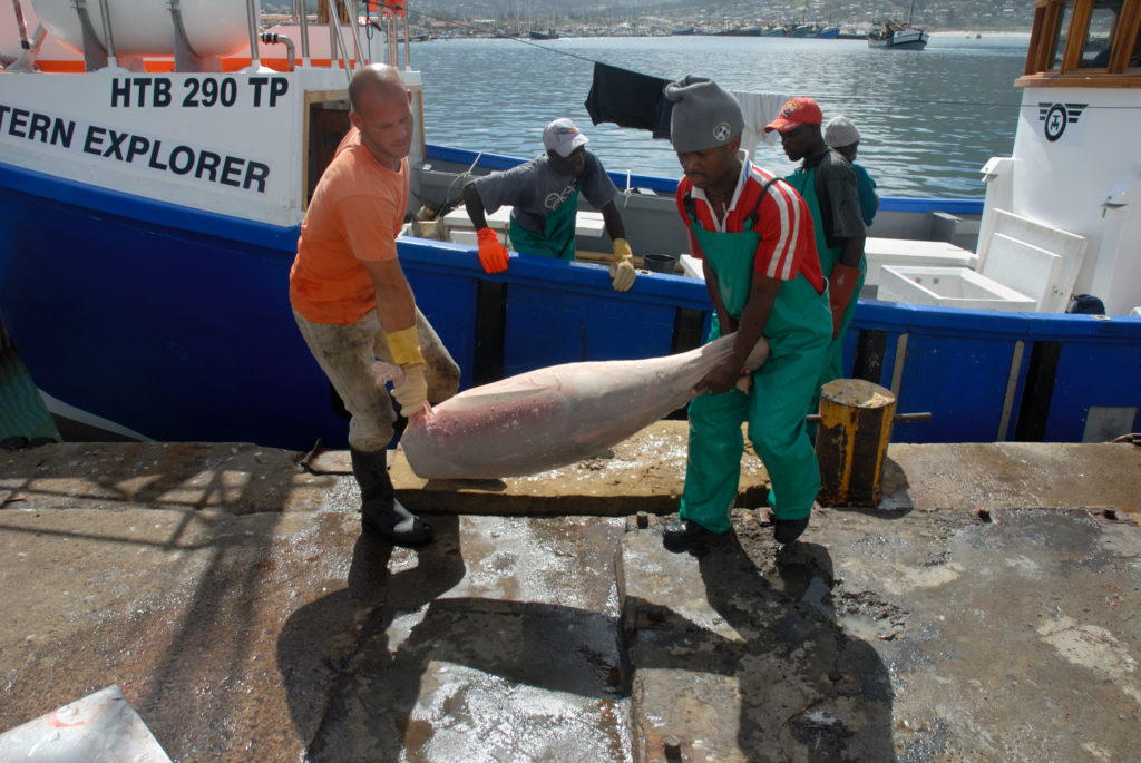 Tuna is unloaded at Hout Bay harbour