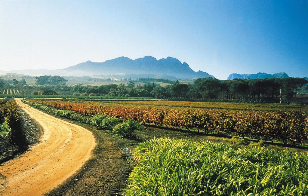Western Cape province: Beyerskloof Wine Farm near Stellenbosch