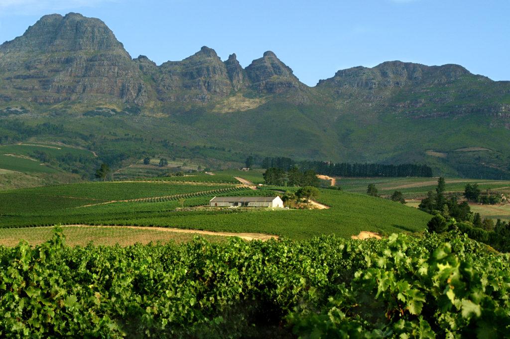 Western Cape province: Vineyards near Stellenbosch