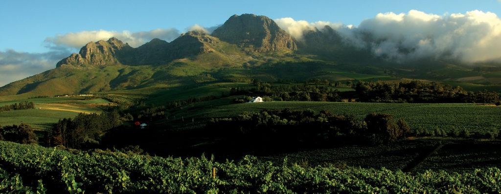 Stellenbosch, Western Cape province: Haskell Vineyards