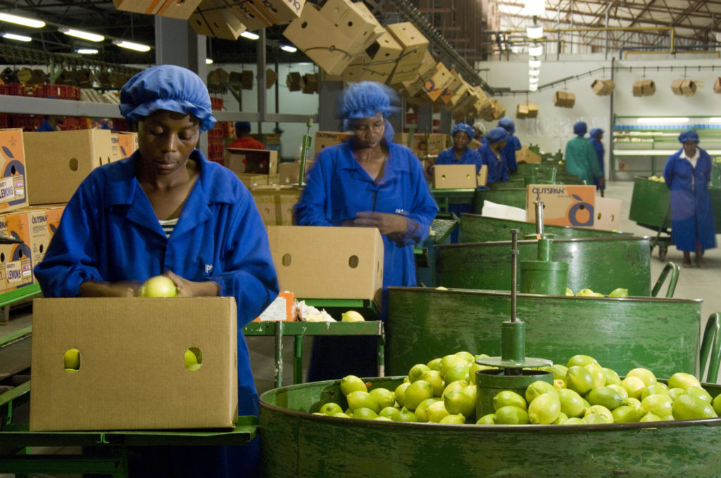 Hoedspruit, Limpopo province: Fruit packing at Bavaria farm