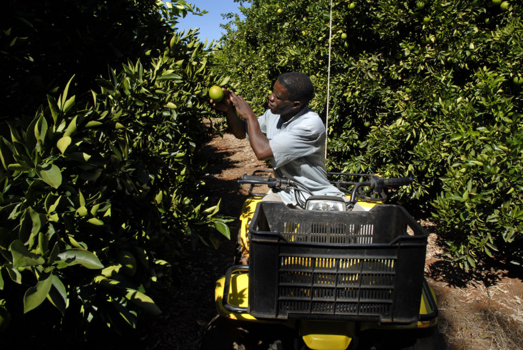 Northern Cape province: Piet Lwaneka checks the oranges and irrigation systems