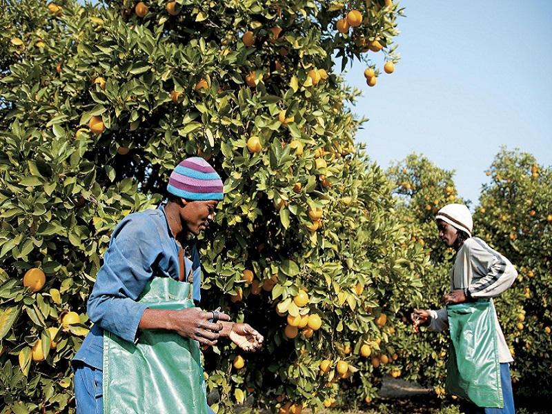 fruit export import south africa