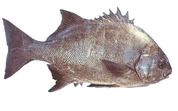 national_fish_art